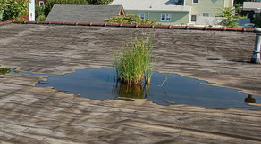 Ponding on Flat Roof Henrico Roofing VA